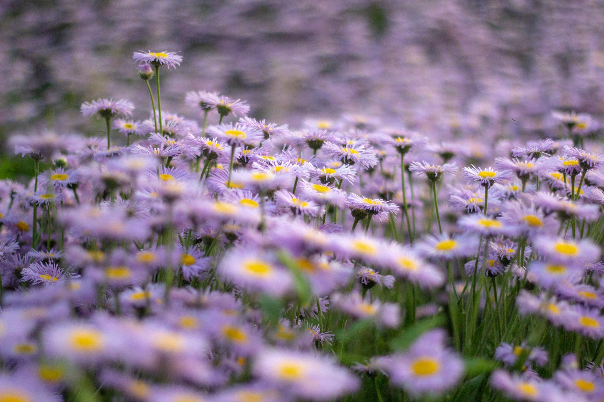 flowers 5080164 1920